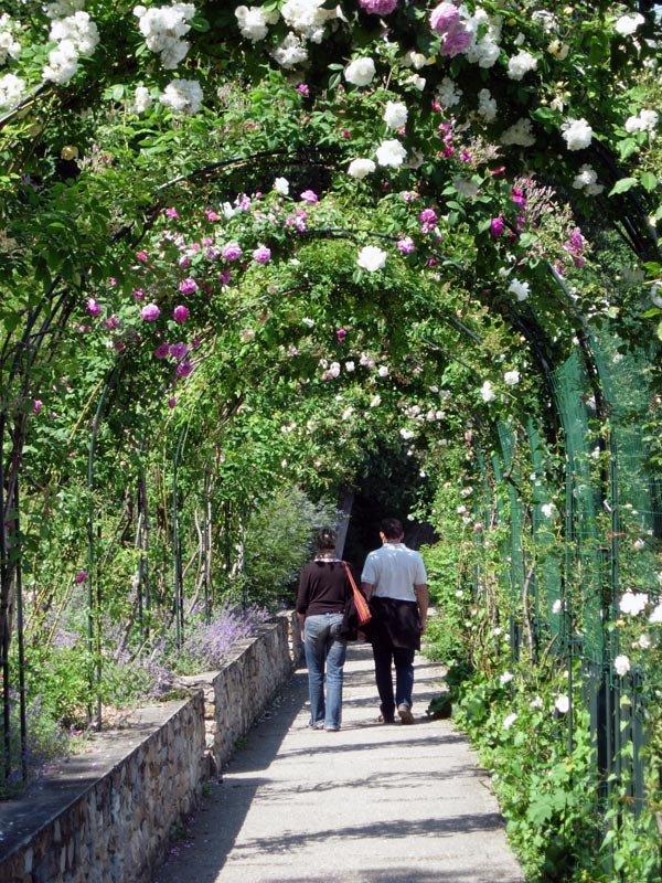 Lyon roses 2015 lyon et la nature for Le jardin lyon