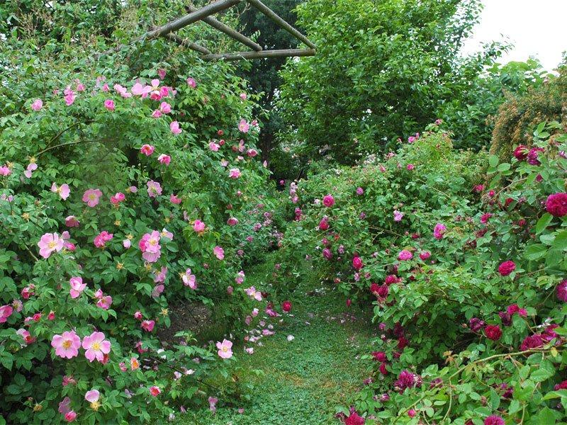 lyon roses 2015 rose gardens. Black Bedroom Furniture Sets. Home Design Ideas