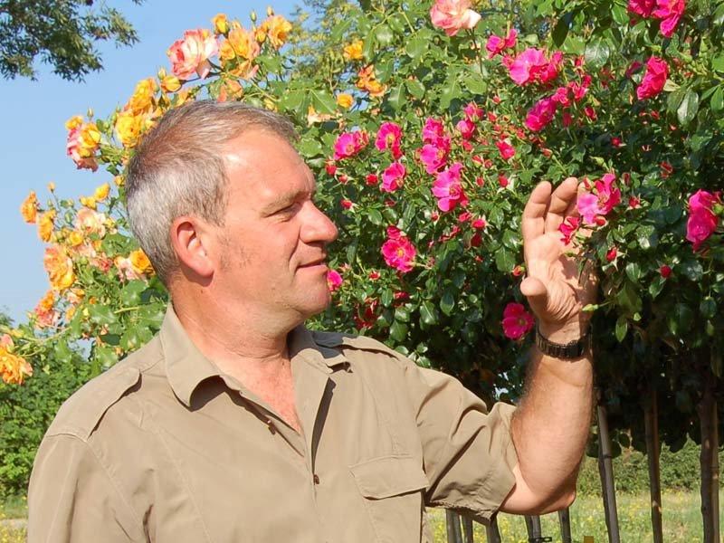 roses félix grand lemps